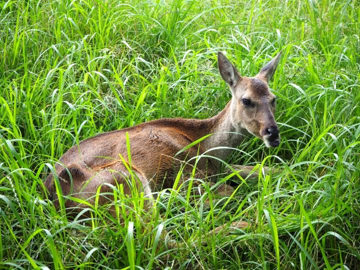 Roe Deer Observation Center(Jeju)